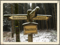 Wegkreuzung Kühbacher Forst
