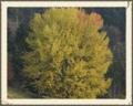 Baumveteranen von Steibis